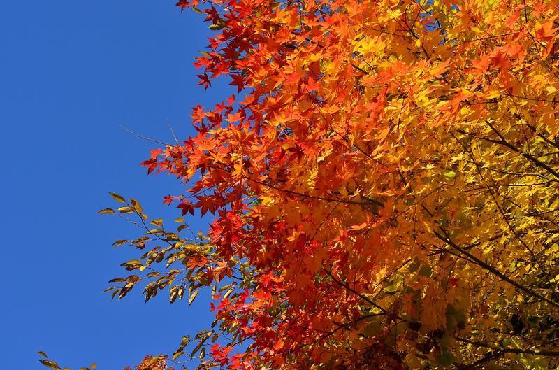 Краса жовтня - частина 15 Природа, Осінь, Жовтень, Дерева, Парк, Схід, Сонце, Вода, Листя, Небо id1831291866