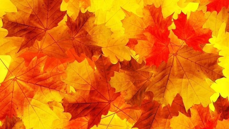 Краса жовтня - частина 15 Природа, Осінь, Жовтень, Дерева, Парк, Схід, Сонце, Вода, Листя, Небо id436821457