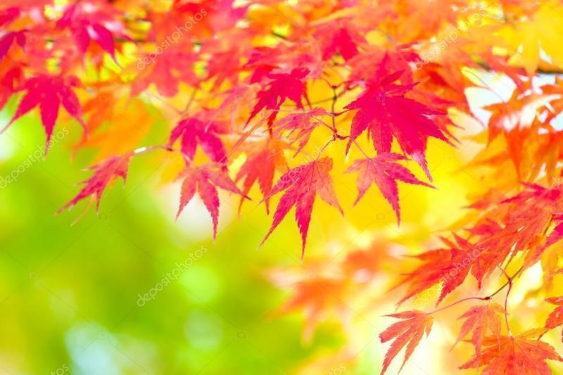Краса жовтня - частина 16 Природа, Осінь, Жовтень, Дерева, Парк, Схід, Сонце, Вода, Листя, Небо id414475682