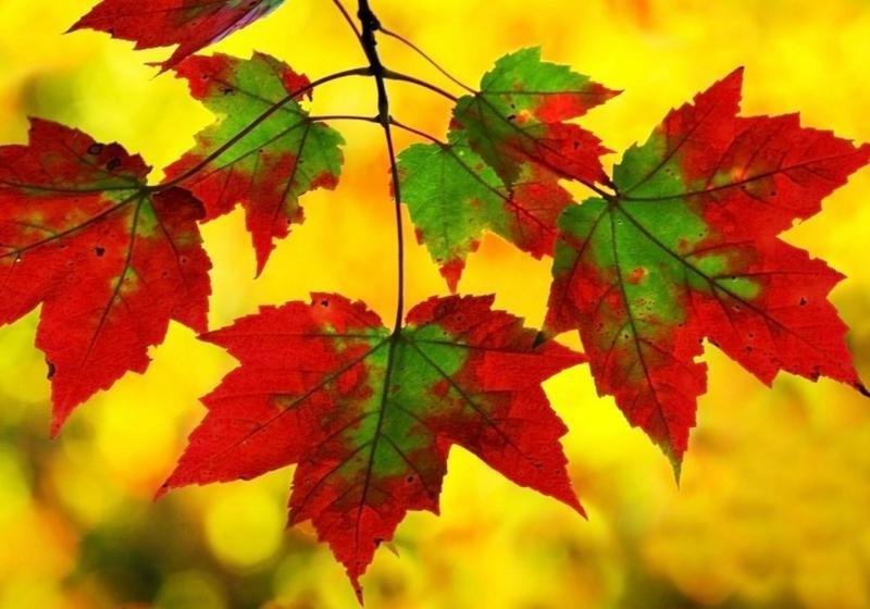 Краса жовтня - частина 16 Природа, Осінь, Жовтень, Дерева, Парк, Схід, Сонце, Вода, Листя, Небо id991495003