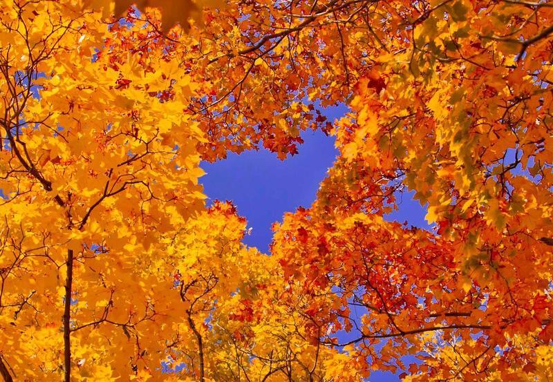 Краса жовтня - частина 16 Природа, Осінь, Жовтень, Дерева, Парк, Схід, Сонце, Вода, Листя, Небо id1281928990