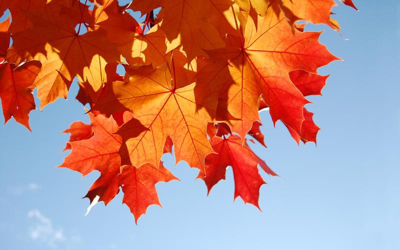Краса жовтня - частина 16 Природа, Осінь, Жовтень, Дерева, Парк, Схід, Сонце, Вода, Листя, Небо id1377865240