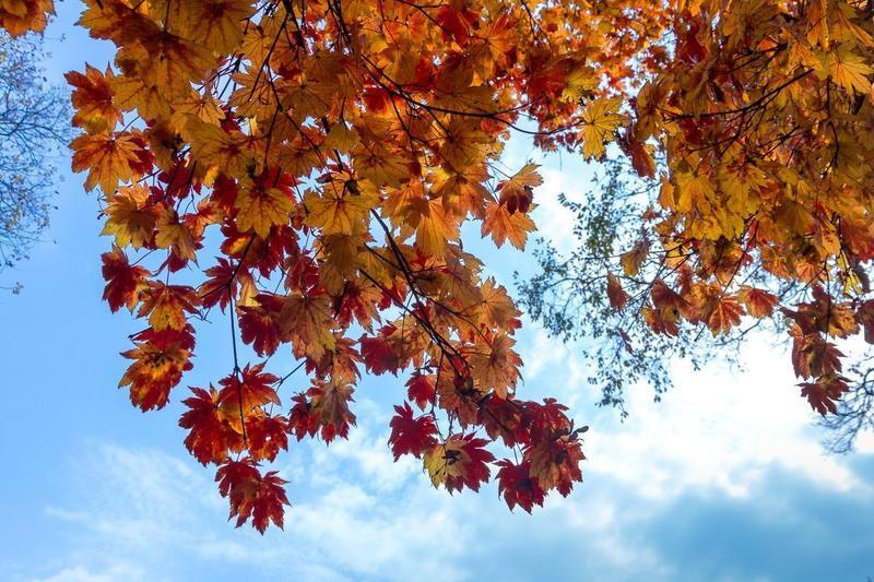 Краса жовтня - частина 16 Природа, Осінь, Жовтень, Дерева, Парк, Схід, Сонце, Вода, Листя, Небо id1846502187