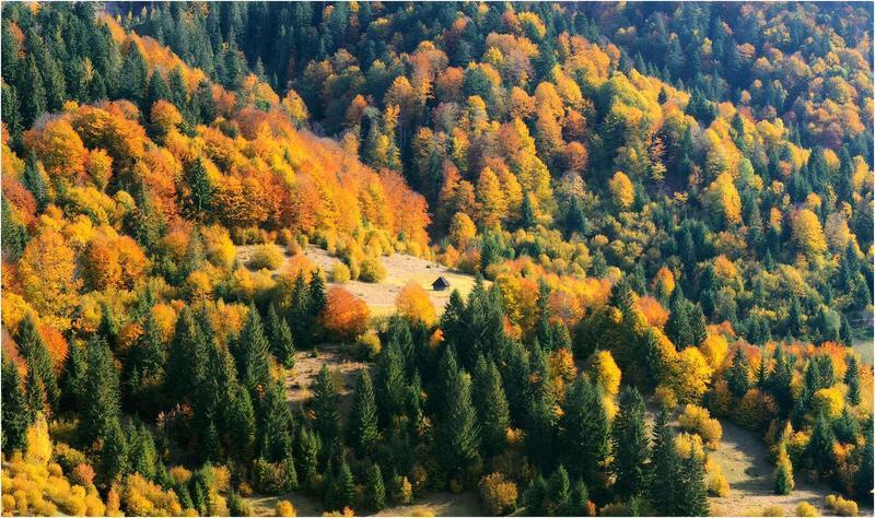 Краса жовтня - частина 17 Природа, Осінь, Жовтень, Дерева, Карпати, Схід, Сонце, Вода, Листя, Небо id915931454