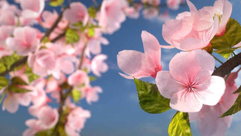 Весна. Травень. Пори року. Солов'їний місяць Природа, Квіти, Весна, Травень, Соловей, Прикмети, Сонце, Птахи, Трава, Пори року id1179249957