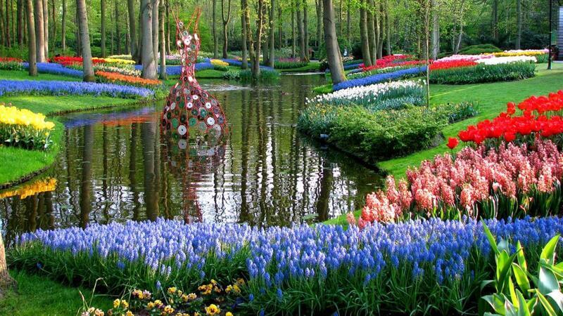 Знайомства Нідерланди. Королівський парк  Цікаві місця для побачень, Нідерланди, Квіти, Парк, Знайомства, Дві Зірки, 12dz.com id831869576