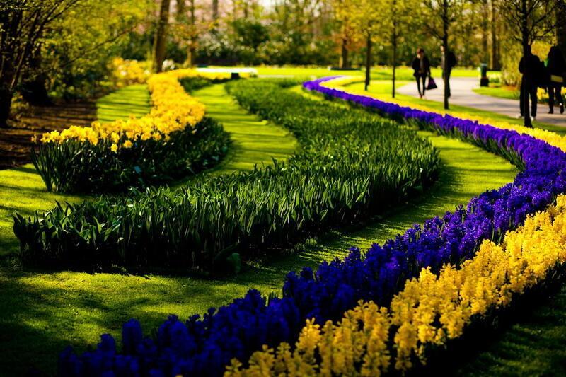 Знайомства Нідерланди. Королівський парк  Цікаві місця для побачень, Нідерланди, Квіти, Парк, Знайомства, Дві Зірки, 12dz.com id1635398238