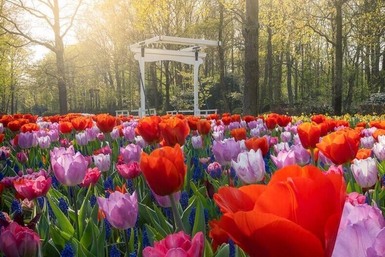 Знайомства Нідерланди. Кекенхоф - садово-паркове мистецтво Цікаві місця для побачень, Нідерланди, Квіти, Парк, Знайомства, Дві Зірки, 12dz.com id1930905687