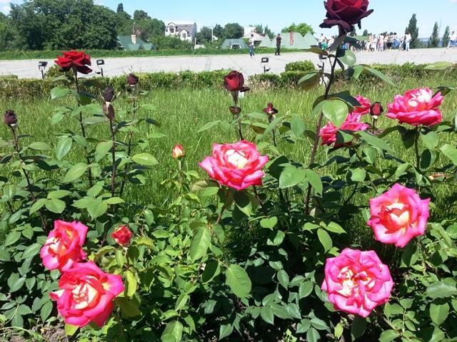Знайомства Черкаси. Долина троянд - Сонячний годинник «Птах» Цікаві місця для побачень, Природа, Парк, Троянди, Сонячний годинник id1710253771