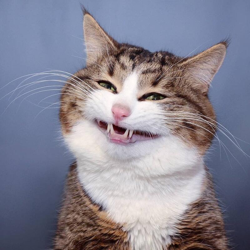 Чи варто заводити кота? - частина 3 Природа, Тварини, Кіт, Кішка, Коти, Любов, Позитив, Емоції, Найгарніші ФотоШпалери, ФотоШпалери на робочий стіл id1717553431