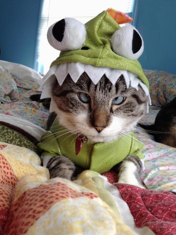 Чи варто заводити кота? - частина 3 Природа, Тварини, Кіт, Кішка, Коти, Любов, Позитив, Емоції, Найгарніші ФотоШпалери, ФотоШпалери на робочий стіл id632557863