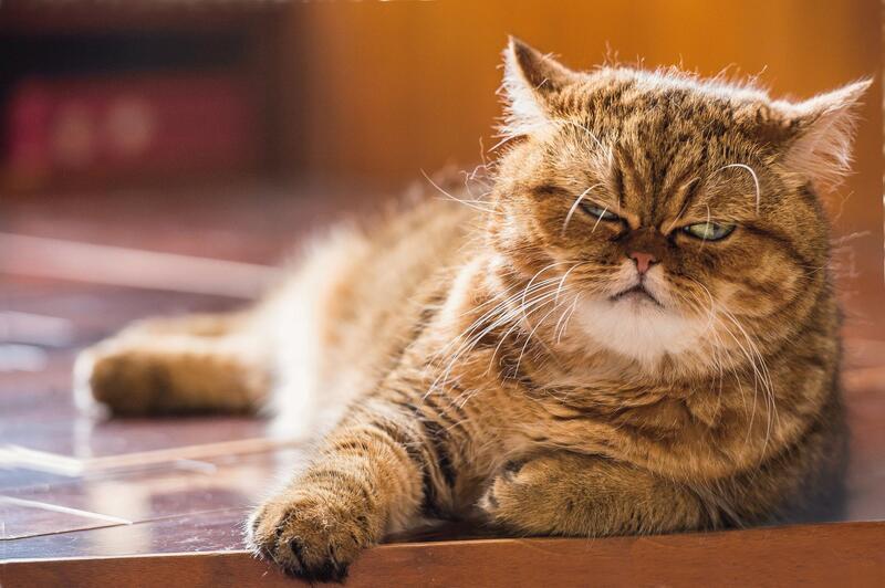Чи варто заводити кота? - частина 3 Природа, Тварини, Кіт, Кішка, Коти, Любов, Позитив, Емоції, Найгарніші ФотоШпалери, ФотоШпалери на робочий стіл id200563874