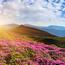 Шпалери Гарних квітів в природі частина 1 Природа, Квіти, Сонце id636057738