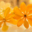 Дивовижна краса природи - частина 8 Тюльпани, Бузок, Небо, Природа, Квіти, Захід, Схід id298230905