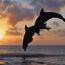 Звірі в природі  - частина 1 Природа, Лев, Панда, Дельфіни, Море, Океан, Птахи, Папуга, Кіт id426409400
