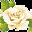 Чарівність троянд - частина 2 Ніжність, Краса, Природа, Квіти, Троянди, Білі троянди, Рожеві троянди, Любов / Кохання id1900797312
