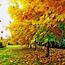 Краса вересня - частина 2 Природа, Осінь, Дерева, Листя, Сонце, Гори, Позитив, Небо, Ліс, Царство Природи id661077387
