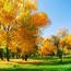 Краса жовтня - частина 1 Природа, Листя, Осінь, Жовтень, Дерева, Парк, Схід, Сонце, Вода, Небо id1962642184