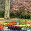 Знайомства Нідерланди. Кекенхоф - садово-паркове мистецтво Цікаві місця для побачень, Нідерланди, Квіти, Парк, Знайомства, Дві Зірки, 12dz.com id866221318