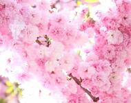 Beauty of spring part 1 Flowers, Wallpaper, Spring, Day, Sun, Sky id1803298222