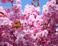Beauty of spring part 1 Flowers, Wallpaper, Spring, Day, Sun, Sky id400340670