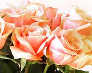 Квіти любові - частина 2 Троянди, Сад, Любов, Природа, Квіти id1185520895