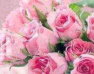 Квіти любові - частина 2 Троянди, Сад, Любов, Природа, Квіти id380659551