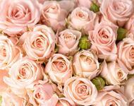 Квіти любові - частина 2 Троянди, Сад, Любов, Природа, Квіти id217184836