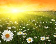 Дивовижна краса природи - частина 2 Ромашки, Небо, Любов, Природа, Квіти, Захід, Схід, Сонце id1961369830