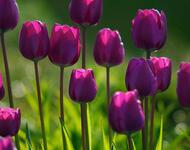 Дивовижна краса природи - частина 2 Ромашки, Небо, Любов, Природа, Квіти, Захід, Схід, Сонце id316719692
