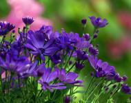 Дивовижна краса природи - частина 3 Ромашки, Небо, Любов, Природа, Квіти, Захід, Схід, Сонце id251879000