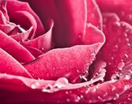 Дивовижна краса природи - частина 4 Ромашки, Троянди, Небо, Любов, Природа, Квіти, Захід, Схід, Сонце id328404287