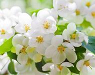 Дивовижна краса природи - частина 6 Сакура, Магнолія, Крокуси, Небо, Природа, Квіти, Захід, Схід, Черешня id1281814072