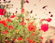 Дивовижна краса природи - частина 6 Сакура, Магнолія, Крокуси, Небо, Природа, Квіти, Захід, Схід, Черешня id512907601