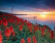 Дивовижна краса природи - частина 7 Сакура, Тюльпани, Бузок, Небо, Природа, Квіти, Захід, Схід, Черешня id2105718361