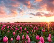 Дивовижна краса природи - частина 8 Тюльпани, Бузок, Небо, Природа, Квіти, Захід, Схід id1237401842