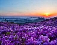 Дивовижна краса природи - частина 8 Тюльпани, Бузок, Небо, Природа, Квіти, Захід, Схід id1540864022