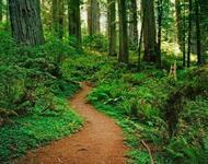Дивовижна краса природи - частина 17 Пальми, Хвилі, Дерева, Парк, Море, Океан, Схід, Захід, Острів, Вода id607099765