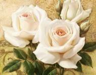 Любов і троянди - частина 5 Ніжність, Небо, Природа, Кущ, Роса, Квіти, Троянди, Любов / Кохання, Схід, Сонце id263395855