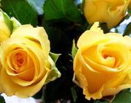 Любов і троянди - частина 7 Ніжність, Небо, Природа, Кущ, Роса, Квіти, Троянди, Любов / Кохання, Схід, Сонце id664038335