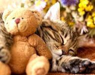 Kittens - Part 5  592115400