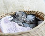 Позитивні емоції - частина 1 Природа, Тварини, Кіт, Кішка, Коти, Любов, Позитив, Емоції, Кошик, Царство Природи id355070734