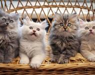 Позитивні емоції - частина 1 Природа, Тварини, Кіт, Кішка, Коти, Любов, Позитив, Емоції, Кошик, Царство Природи id1914281964