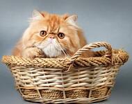 Позитивні емоції - частина 1 Природа, Тварини, Кіт, Кішка, Коти, Любов, Позитив, Емоції, Кошик, Царство Природи id652775136
