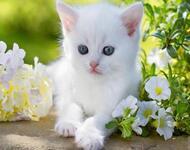 Позитивні емоції - частина 4 Природа, Тварини, Кіт, Кішка, Коти, Любов, Позитив, Емоції, Кошик, Царство Природи id1091467096