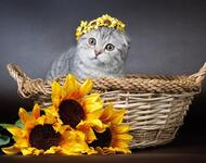 Позитивні емоції - частина 5 Природа, Тварини, Кіт, Кішка, Коти, Любов, Позитив, Емоції, Кошик, Царство Природи id50302983
