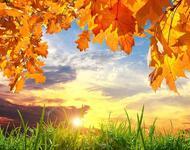Краса вересня - частина 1 Природа, Осінь, Дерева, Листя, Сонце, Гори, Позитив, Небо, Ліс, Царство Природи id502593968