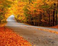 Краса вересня - частина 2 Природа, Осінь, Дерева, Листя, Сонце, Гори, Позитив, Небо, Ліс, Царство Природи id794165792