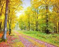 Краса вересня - частина 3 Природа, Осінь, Дерева, Листя, Сонце, Гори, Позитив, Небо, Ліс, Царство Природи id1653400294