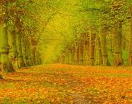 Краса вересня - частина 3 Природа, Осінь, Дерева, Листя, Сонце, Гори, Позитив, Небо, Ліс, Царство Природи id1979077512
